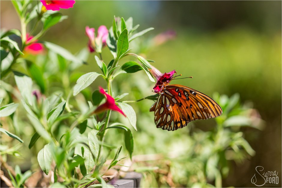 Butterfly lands on blooming flowers